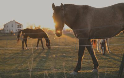 WaterShed Animal Fund Introduces Equine Initiative