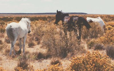 Bluebonnet Equine Humane Society Joins The Right Horse Initiative to Help Horses Find The Right Home