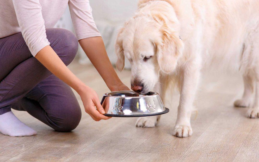 WaterShed Animal Fund Partners with Charleston Animal Society to Fund Rural Animal Welfare Program