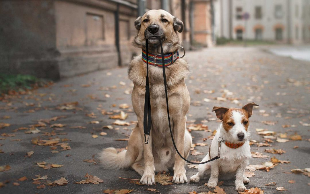 Jenessa Cutler named Program Officer, Animal Welfare